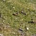4-beinige Karbewohner
