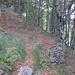 im Wald ist die Spur wieder leichter erkennbar