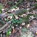 der Waldboden lebt