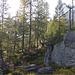 durch den lichten Wald mit hübschen Felsen hinauf