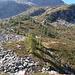 und durch viel niedriges Buschwerk Richtung Btta di Catögn