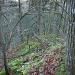 ...bis man über kleine Platten und steilem Wald ein grätchen erreicht.