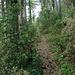 Aufstieg auf rutschigem Pfad, Kiefernnadeln, Kiefernzapfen und alles bestückt mit Steinen