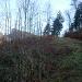 Forstwege und -strassen in der Eichlenberg NW-Flanke.