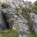 bei diesem Loch geht es rechts über gut gestufte Gras- und Kalkstufen hoch