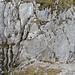 ...und auf der anderen Seite über den Kamin wieder hinauf. Das Schlüsselstelle ist mit einem Stahlseil entschärft.