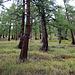 Dans la forêt en dessous de Chrindellicka.