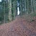 Forststrasse, Chilchberg N-Flanke. 1