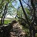 Oberhalb des Creux du Van befinden sich diese mediterran wirkenden Trockenmauern