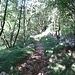 Von Brgudac geht's in Serpentinen durch einen Laubwald auf ein Karstplateau auf etwa 1000m Höhe