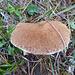 Noch ein dicker Pilz
