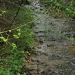 gibts im Jura leider meist nur bei Regen.
