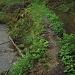 nicht die Grenze, sondern Damm des Mühlekanals (rechts).