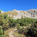 am Anfang geht ein deutlicher Weg durch die Bergkiefer-Sträucher hindurch.