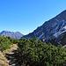 nun bin ich wieder bei den Bergkiefer Sträuchern angelangt.