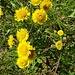 fioriture