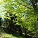 durch grüne Wälder hinauf zum Grasbergsattel