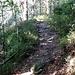 Jetzt folgt ein längerer Aufstieg durch den Wald, nun auch auf schmaleren Wegen.