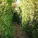 der Buchsbaumweg von Combebren nach La Blaquière