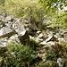 ...durch Felsen und Blockwerk vor Artilleriebeschuss geschützt...