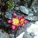 weitere Blumenpracht 6