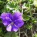 weitere Blumenpracht 4
