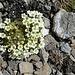 weitere Blumenpracht 8
