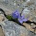 ... mit (kleiner) Blumenpracht 9