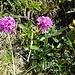 weitere - selten zu sehende - Blumenpracht 3