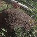 Ein riesiger Ameisenhaufen am Wegesrand