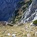 danach muss man diese steile Gras- und Schotterrinne bis fast zum Gipfel hochkraxeln, im oberen Bereich mehr rechts haltend.