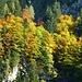 ein Herbstgruß zum Abschied (Zoom)