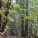 Immer im dichten Wald geht es bergauf, im Taleinschnitt dominieren Buchen und Edelkastanien