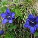 zurück in der Blumenwelt