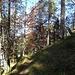 Abstieg durch schönen Mischwald