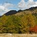 Fall colors at Klammeben.