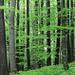 schöner Frühlingswald.