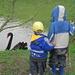 Attraktion: schwarzer Schwan am Ausgleichsbecken des Tösstaler Kanals. Ob wohl die Kohle vom Kohlenloch abgefärbt hat?