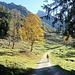 Herbstambiente. Erstmals zeigt sich die Steilgras-Königin.
