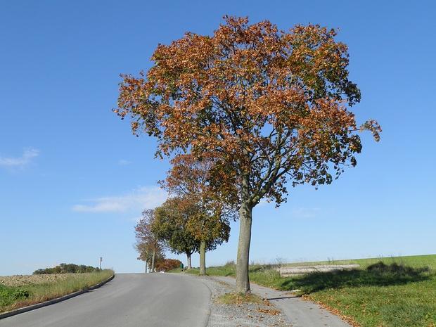 aber der Herbst ist auch schon sichtbar