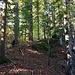Der Pfad durch den Wald nach Samstageren und Windwurf - 1361 Meter.