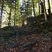 Wegpassage auf dem wildromantischen Pfad durch den Langwald hoch.
