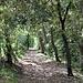 <b>Lecceto</b>.<br />Nell'ultimo tratto il sentiero si allontana dal ciglione carsico per entrare in un fitto bosco fino a raggiungere le Latterie Carsiche, punto di ritrovo con il nostro autista.