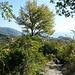 Rückblick nach Corniglia
