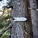 ...wo an einem Baum ein kleines Holzschild zur Alpe Mutta weist.