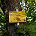 Wald-Parkplatz unterhalb der Limburg
