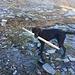 Falls jemand den Weg aufgrund einer fehlenden Markierung nicht mehr findet...mein Hund war's nicht! :D