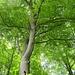 wunderbares Grün überall