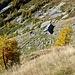 Alpe di Gategn - 1874 Meter