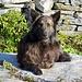Artus geniesst die wärmenden Sonnenstrahlen auf der Alpe di Ribia.